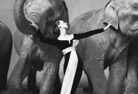 The man of black and white-Richard Avedon