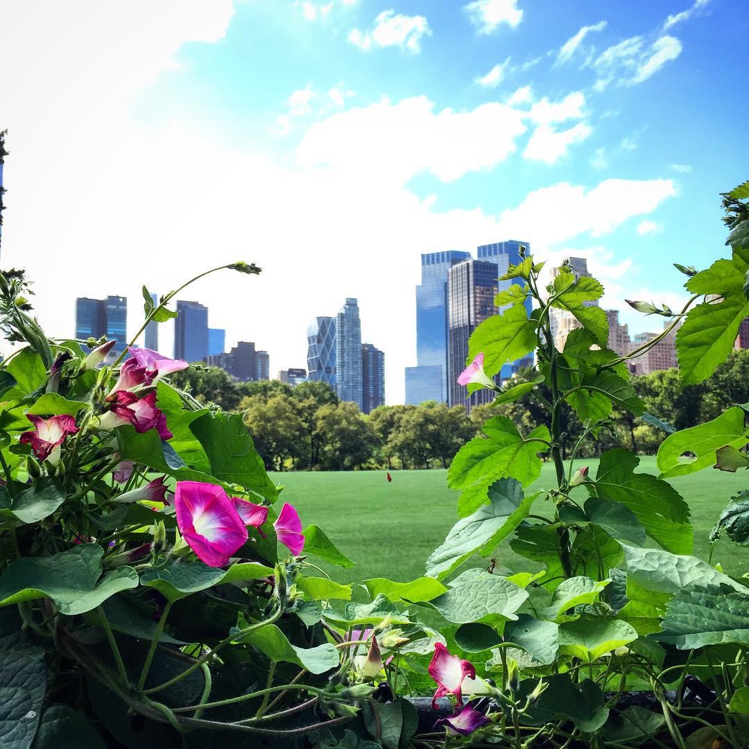 Manchi gi NYC  iloveny newyork nyc beautifulplace beautifulcity travelbloggerhellip