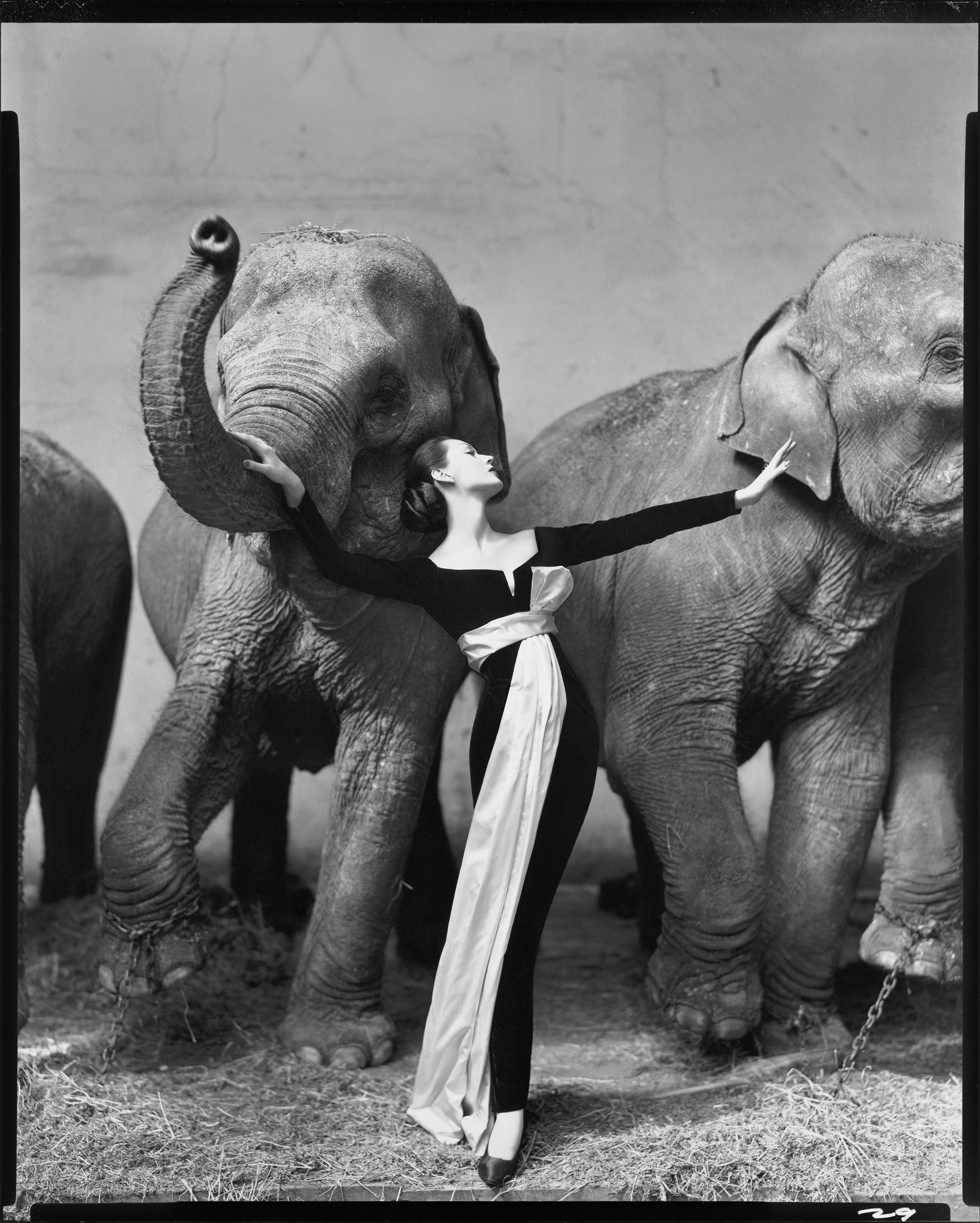 Dovima with elephants, Evening dress by Dior, Cirque d'Hiver, Pa
