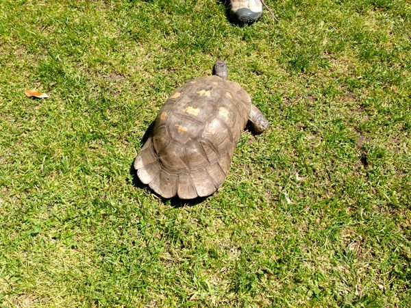 a turtle in the abbey