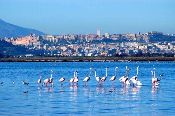 Fenicotteri+a+Cagliari-Sardegna