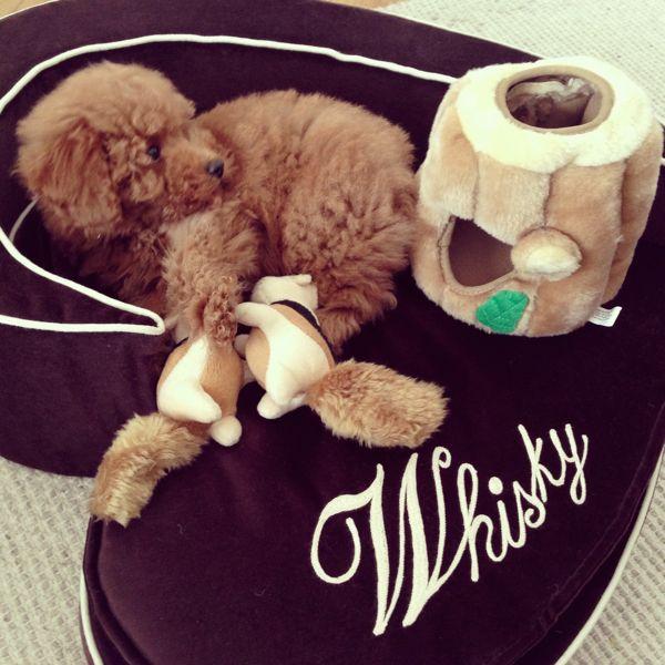 whisky's casetta