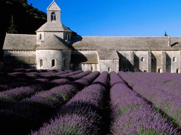 Lavender-Field_-Abbey-of-Senanque_-Near-Gordes_-Provence_-France